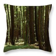 Redwood Trees Armstrong Redwoods St Throw Pillow