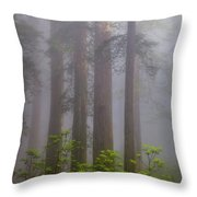 Redwoods By Crescent City 8 Throw Pillow