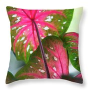 Reflections On The Calming Of Pink Throw Pillow