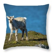 Reindeer Grazing In Spitzbergen Throw Pillow