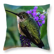 Rescued Ruby-throated Hummingbird Throw Pillow