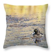 Ring Necked Duck Throw Pillow by Michael Chatt