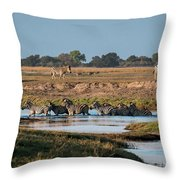 River-crossing Zebras Throw Pillow