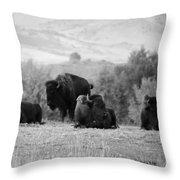 Rocky Mountain Bison Throw Pillow