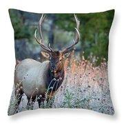 Rocky Mountain Wildlife Bull Elk Sunrise Throw Pillow by Nathan Bush