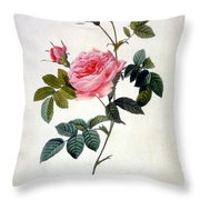 Rosa Inermis Throw Pillow