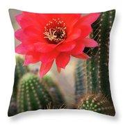 Rose Quartz Cactus Flower  Throw Pillow