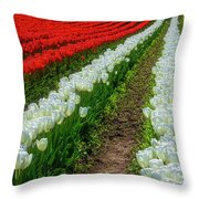 Rows Of White And Red Tulips Throw Pillow