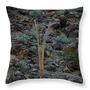 Saguaro Spines Throw Pillow