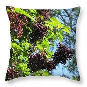 Sambucus Elderberry Sureau Throw Pillow