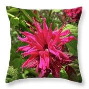 Scarlet Beebalm Throw Pillow