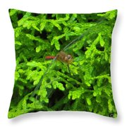 Scarlet Darter Male Dragonfly Throw Pillow