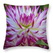 Semicactus Dahlia Throw Pillow