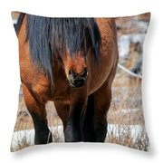 Shaggy Stallion Throw Pillow