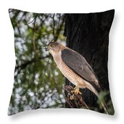 Shikra In The Wild Throw Pillow