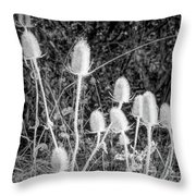 Silver Thistle Seed Pods Throw Pillow