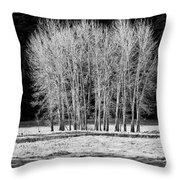 Silver Trees, Yosemite National Park Throw Pillow