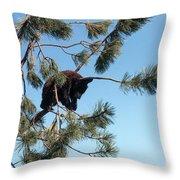 Sleeping Bear Cub Throw Pillow