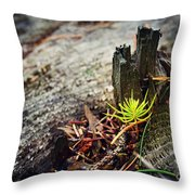 Small Spruce Growing On An Old Tree Stump Throw Pillow