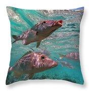 Snapper On Ningaloo Reef, Australia Throw Pillow