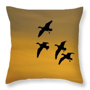 Snow Geese Landing At Sunset Throw Pillow