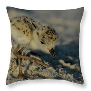 Snowy Plover On The Hunt Throw Pillow