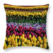 Spectacular Rows Of Colorful Tulips Throw Pillow
