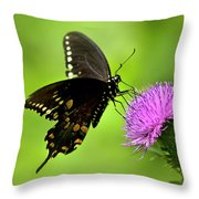 Spicebush Swallowtail Butterfly Throw Pillow