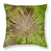 Spiky Plant Pulsatila Halleri Throw Pillow