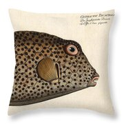 Spotted Trunk Fish  Throw Pillow