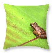 Spring Peeper Hyla Crucifer Throw Pillow by Rick Veldman