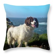 Springer Spaniel Dog In Sennen Cove Throw Pillow