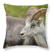 Stone's Sheep Ram Throw Pillow