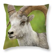 Stone's Sheep Ram Portrait Throw Pillow