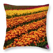 Stunning Rows Of Colorful Tulips Throw Pillow