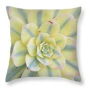 Succulent Aeonium Sunburst Throw Pillow