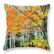 Sugar Maple Acer Saccharum In Autumn Throw Pillow
