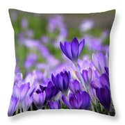 Sun Seekers Throw Pillow