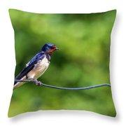 Swallow  Hirundo Rustica  Throw Pillow