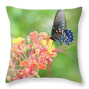 Swallowtail Butterfly Wings  Throw Pillow