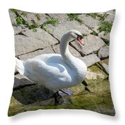 Swan Study 14 Throw Pillow