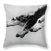 The Borzois, Black And White Sketch, 3 Russian Wolfhounds Throw Pillow