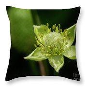 Thimbleweed Flower Throw Pillow