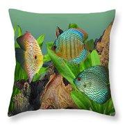 Three Discus Fish Throw Pillow