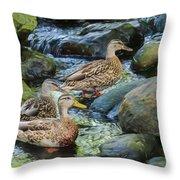Three Mallard Ducks Swimming In A Stone Filled Brook. Throw Pillow