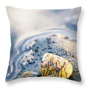 Tiny Seashell Throw Pillow by Nicole Young