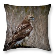 Totem Animal Book Hawk Throw Pillow