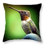 Totem Animal Book Hummingbird Throw Pillow