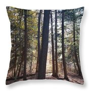 Trees And Shadows  Throw Pillow