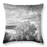 Trees In Florida Throw Pillow